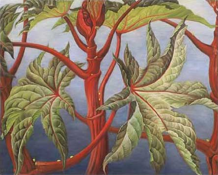 "Castor Oil Plant Oil on Canvas 43"" x 36"" Private Collection, Vancouver Island, Canada"